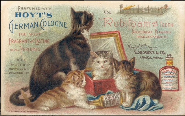 Hoyt's Rubifoam for the Teeth trade card – front 1894